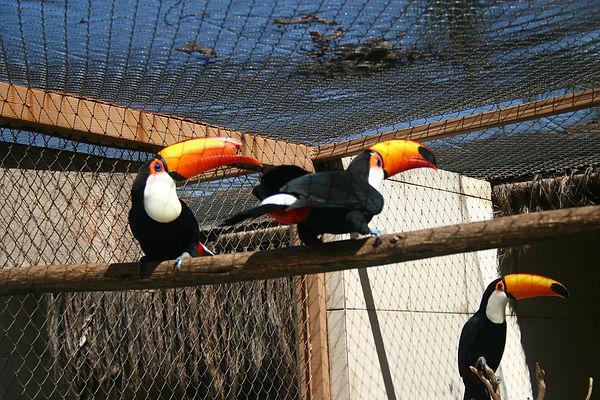 recinto de tucanos