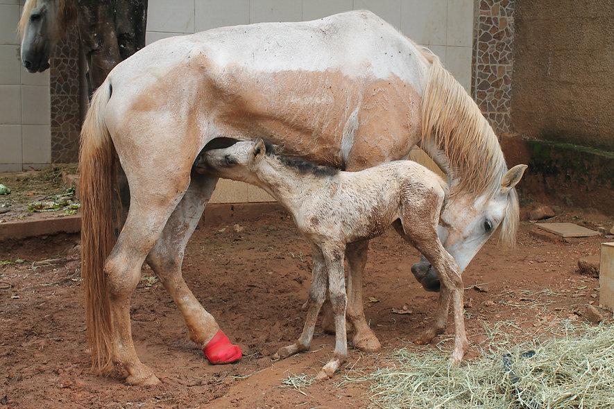 filhotes de cavalo
