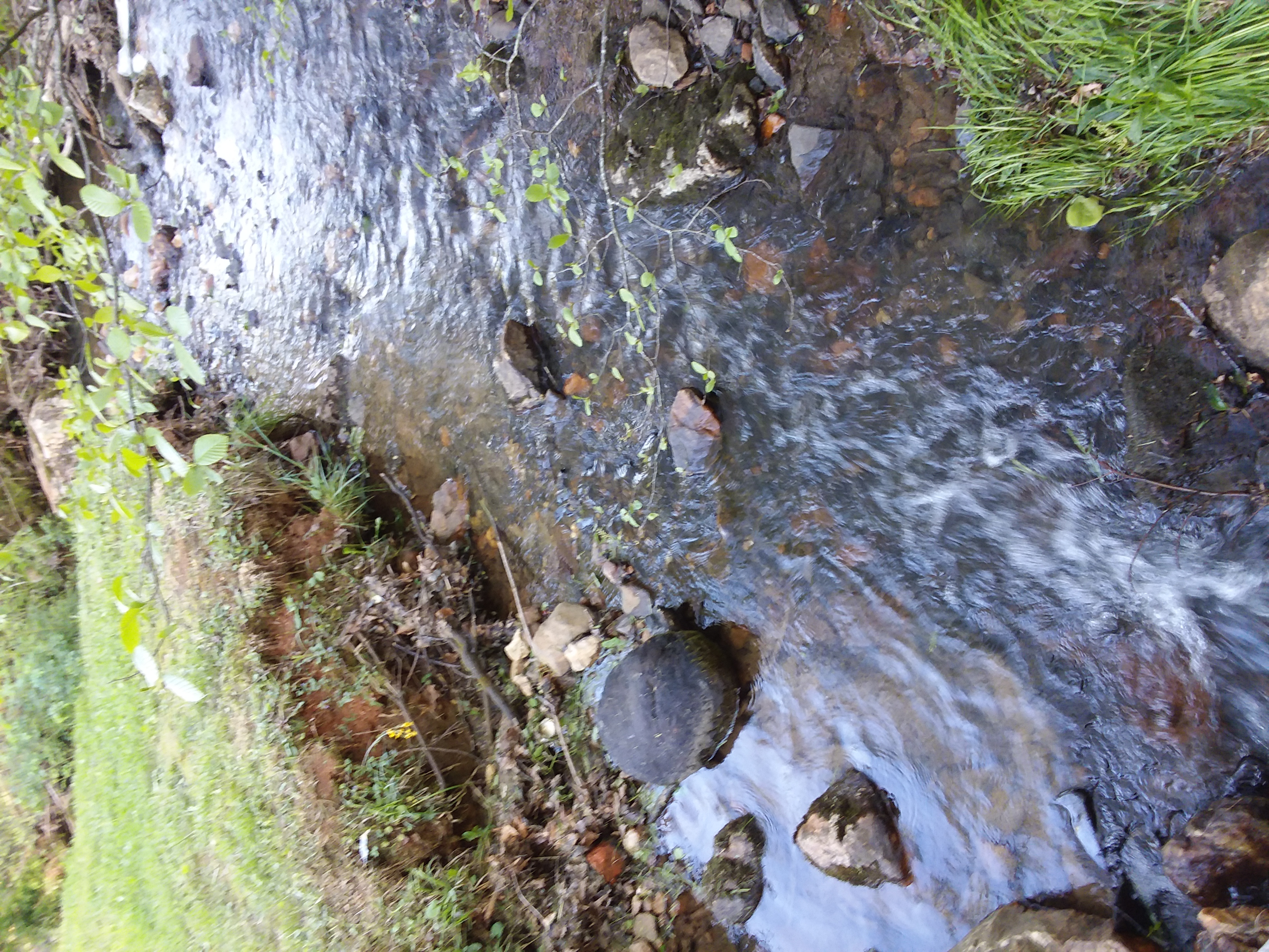 stream near cabin