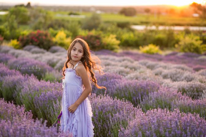 Lavender-13.jpg
