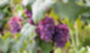 agriculture-berry-branches-760280.jpg