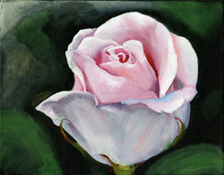 """""""Pink Rose"""" by Alfred Banks"""