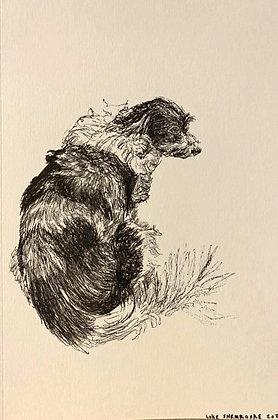 Sweet Little Dog by Luke Shemroske