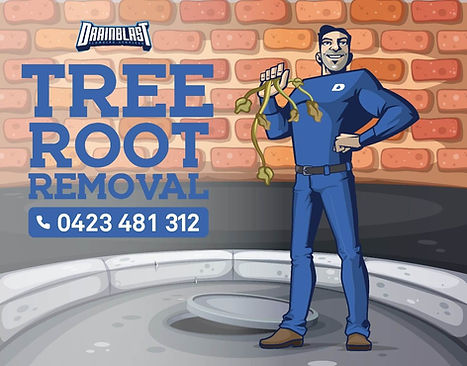 A common problem with residential blocked drains can be tree roots making their way through damaged areas or joins penetrating the drain causing it to block up. If your drains are blocked call Drain Blast Plumbing Melbourne. The reason for this is the Tree is desperate for a drink of water, it will then put pressure on the drain finding weak spots. Forcing the drain to open gaps in the pipe and helping the tree roots to make their way into your drain and block it up.    At Drain Blast Plumbing Melbourne we specialise in tree removal and unblocking your drain pipes. We use specialised drilling and cutting equipment, Drain Blast not only cut out the tree roots but we can also inspect the drain with our camera to ensure that the tree roots have all gone and assess the damage of the pipe if your drains are blocked and you need a plumber to unblock your tree rooted drains and repair your drains call drain blast plumbing for all your blocked drain tree roots needs. Using a specialised bloc