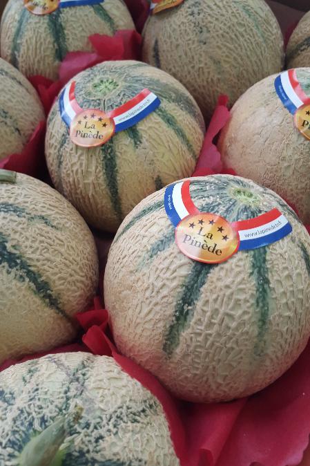 Melon - La Pinède