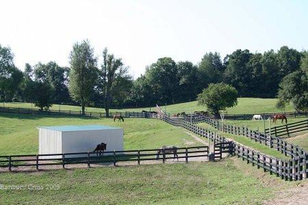Horses in Pastures