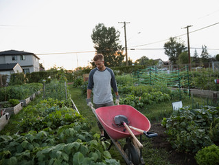7 Ways To Avoid Back Pain While Gardening