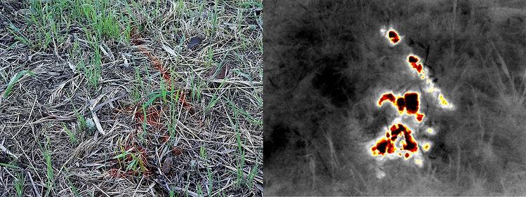 thermal_hunt-trail_orig.jpg