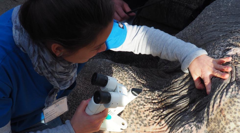 Sophie Jugant - Vétérinaire spécialiste en Ophtalmologie - Ophtovet Méditerranée.jpg