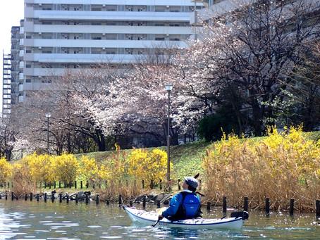 桜シーズン予約状況(3/17時点)