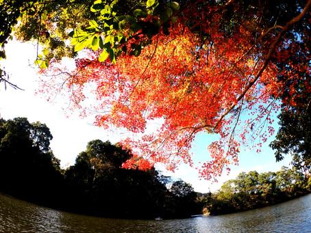 2020/11/28亀山湖カヤックツアー