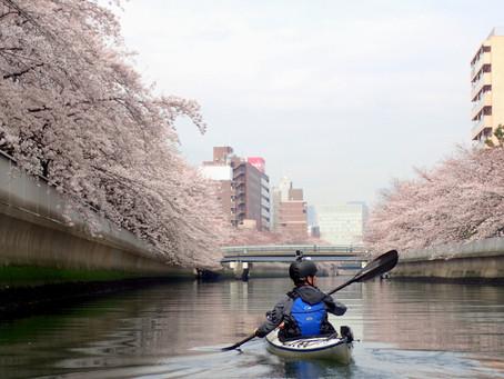 東京水路桜シーズンも段々と近付いてきました。