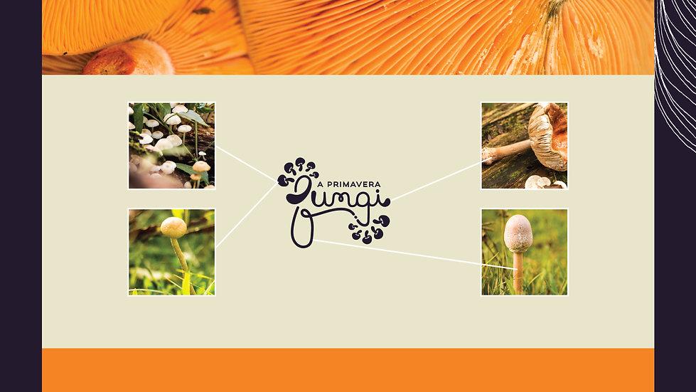 primavera Fungi-07.jpg