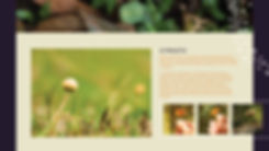 primavera Fungi-02.jpg
