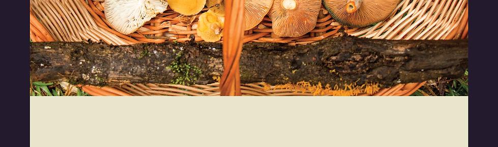 primavera Fungi-11.jpg