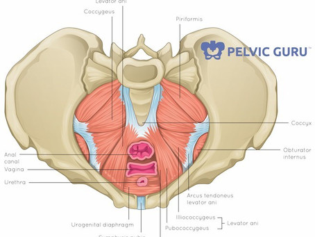 An Introduction to Your Pelvic Floor