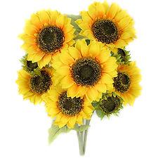 Copy of Copy of Sunflower-Stem-Full-Bloo