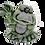 Thumbnail: Smokin Art- Wavin Frog