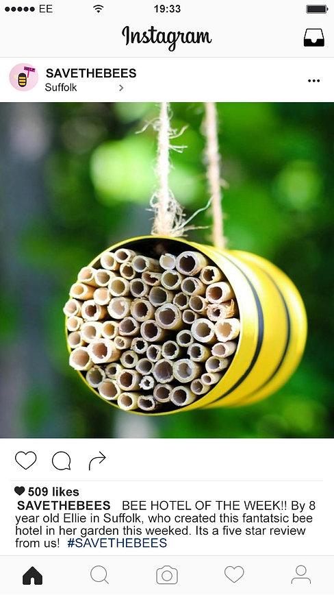 insta post bee.jpg