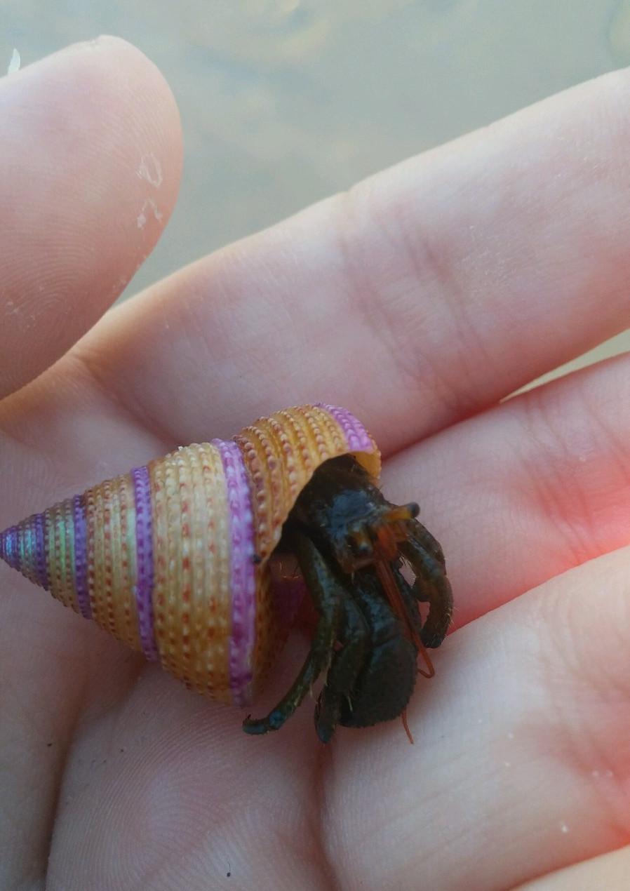 RGB version of Hermit Crab