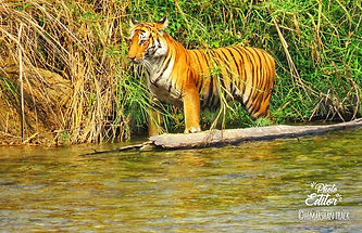 wildlife safari in uttrakhand