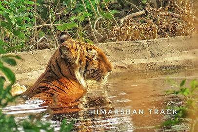 """""""Best Wildlife Safari in Uttarakhand"""", """"Camping in Jim Corbett"""", """" Uttarakhand Birding Tour in Jim Corbett"""", """"Jungle Safari in Jim Corbett"""", """"Jeep Safari in Jim Corbett"""","""