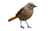 birds_PNG99.png