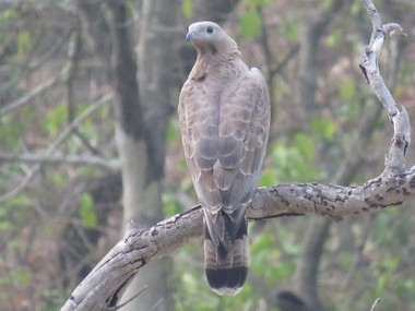 Uttrakhand Birding tour in jim corbett