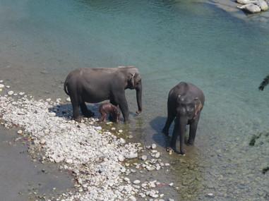 Best wildlife safari in Uttrakhand