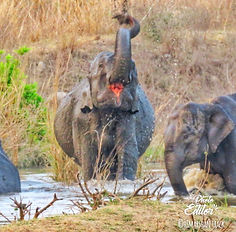 """Best Wildlife Safari in Uttarakhand"", ""Camping in Jim Corbett"", "" Uttarakhand Birding Tour in Jim Corbett"", ""Jungle Safari in Jim Corbett"", ""Jeep Safari in Jim Corbett"","
