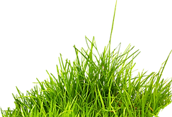grass_PNG10863.png
