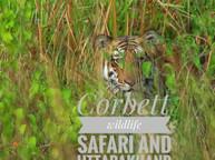 Jungle safari in jim Corbett