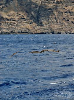 Los Gigantes,gita a vedere i delfini