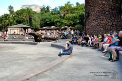 Tropical Park, spettacolo dei rapaci