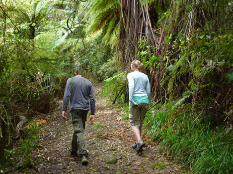 Cable Bay Walk Forest