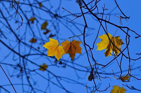 yellow%20leaf_edited.jpg