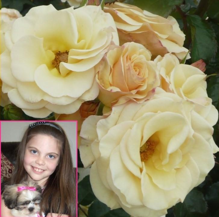Claudia's Rose