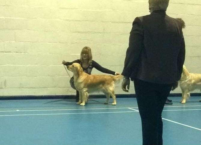 COVENTRY & DISTRICT GUNDOG SOCIETY 2014 OPEN SHOW
