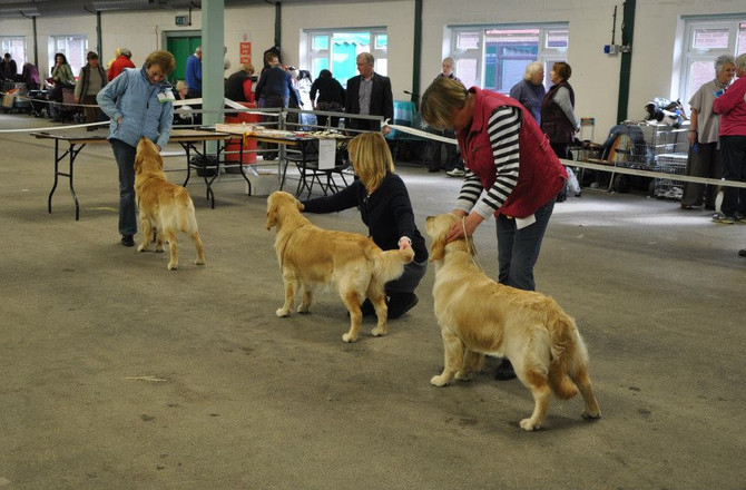POTTERIES & DISTRICT CANINE SOCIETY 2014 OPEN SHOW