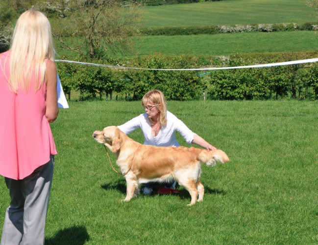 LOUGHBOROUGH & DISTRICT CANINE SOCIETY 2014 OPEN SHOW