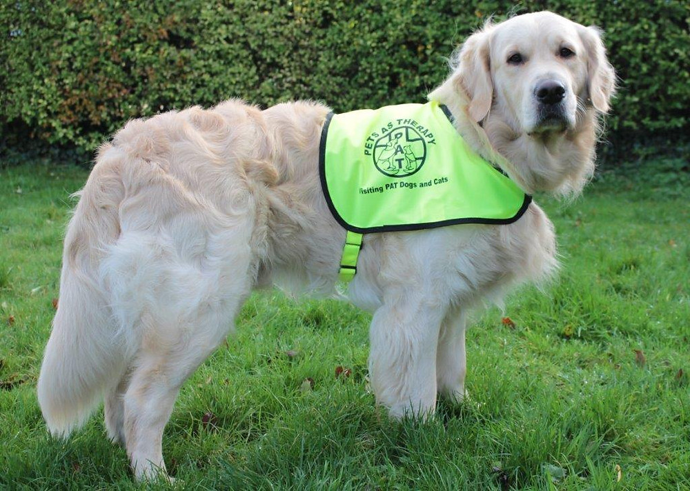 Photography Course & Boo in PAT Dog Uniform 029.jpg