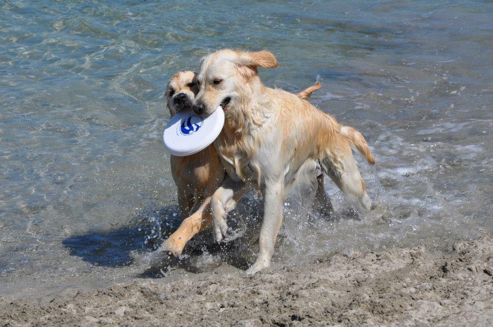 bea frisbee.jpg
