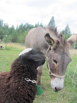 Bah Bah Blacktail Farm (4).jpg