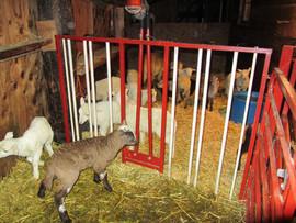 Bah Bah Blacktail Farm (40).jpg