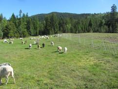 Bah Bah Blacktail Farm (30).jpg