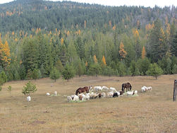 Bah Bah Blacktail Farm (34).jpg