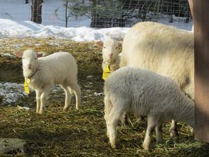 Bah Bah Blacktail Farm (38).jpg
