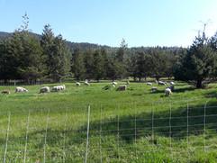 Bah Bah Blacktail Farm (44).jpg