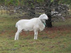 Bah Bah Blacktail Farm (35).jpg