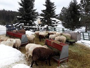 Bah Bah Blacktail Farm (47).jpg